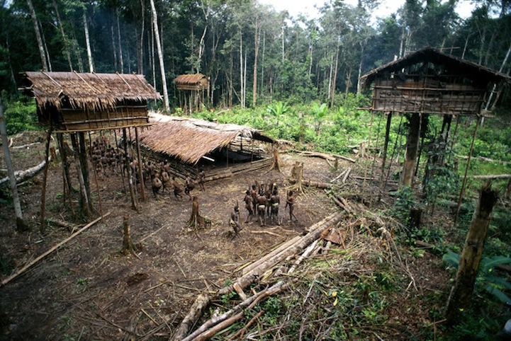 The Lost Treehouse Tribes of the Rainforest