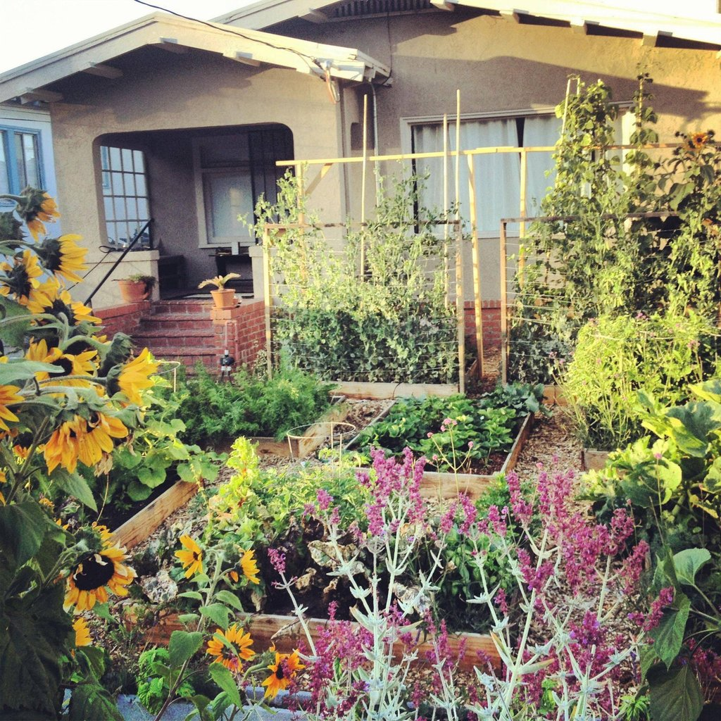 Back Yard Potager: The Little Urban Veggie Garden
