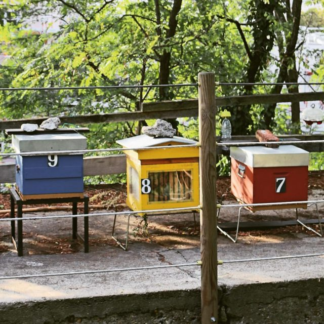 Beehives of Paris myhappyplace Jardin de la Butte Bergeyre searchhellip