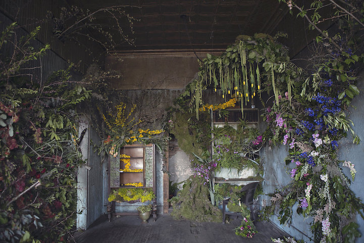 Helping nature re decorate the abandoned homes of detroit heathersaunders flowerhouse mightylinksfo