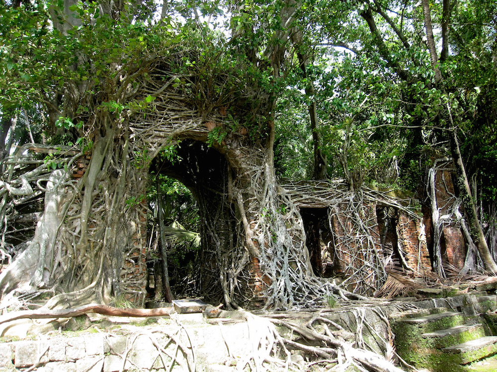 Buried By Nature The Dark Colonial Past Of Jungle Book Island
