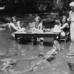 dining-with-alligators