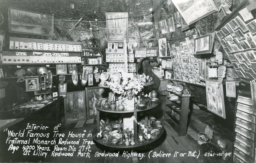 Interior_of_World_Famous_Tree_House_in_Fraternal_Monarch_Redwood_Highway_6561
