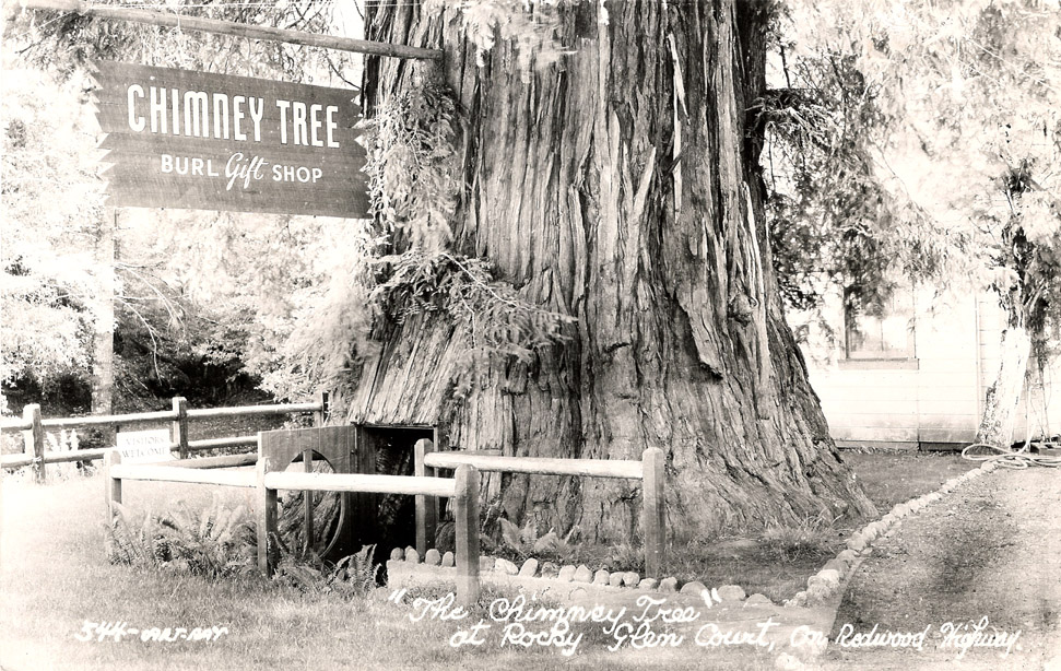 Redwood_Highway_CA_Chimney_Tree