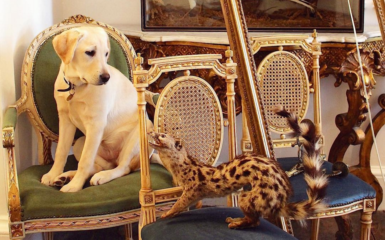 Dog Lover Restores Historic Mansion while her Labradors Live the ...