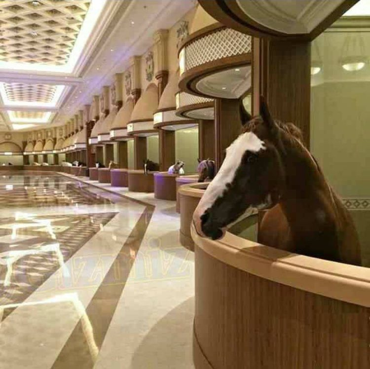 They Built A Luxury Marble Palace For Horses In China