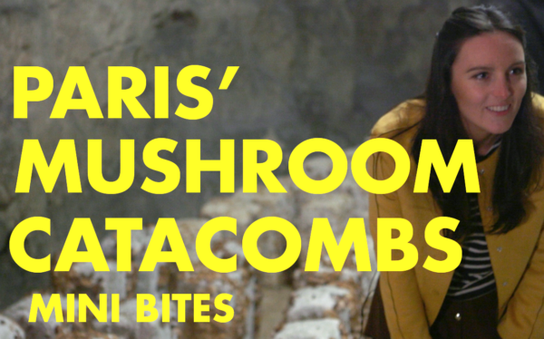 The Parisian Mushroom Catacombs