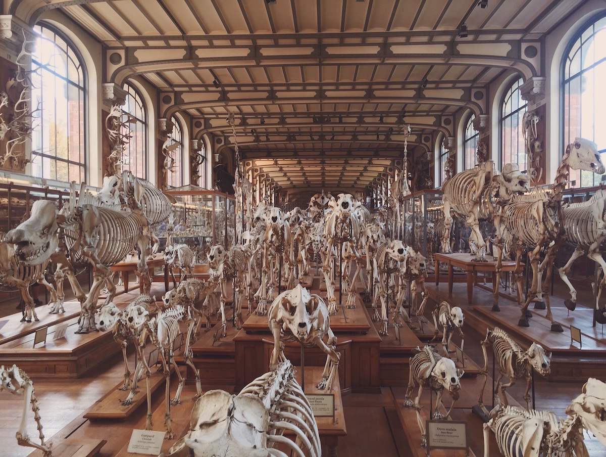 What Is Inside The Natural History Museum