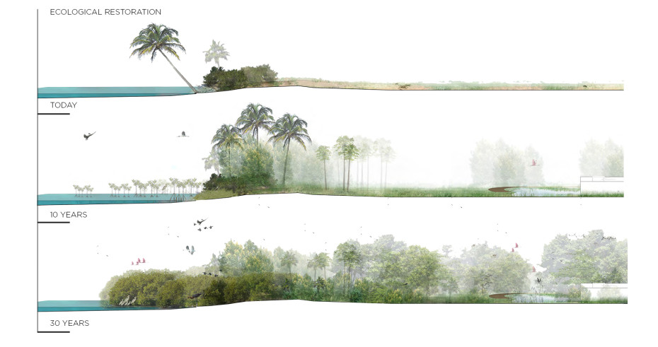 ecological-restoration-section-illustration