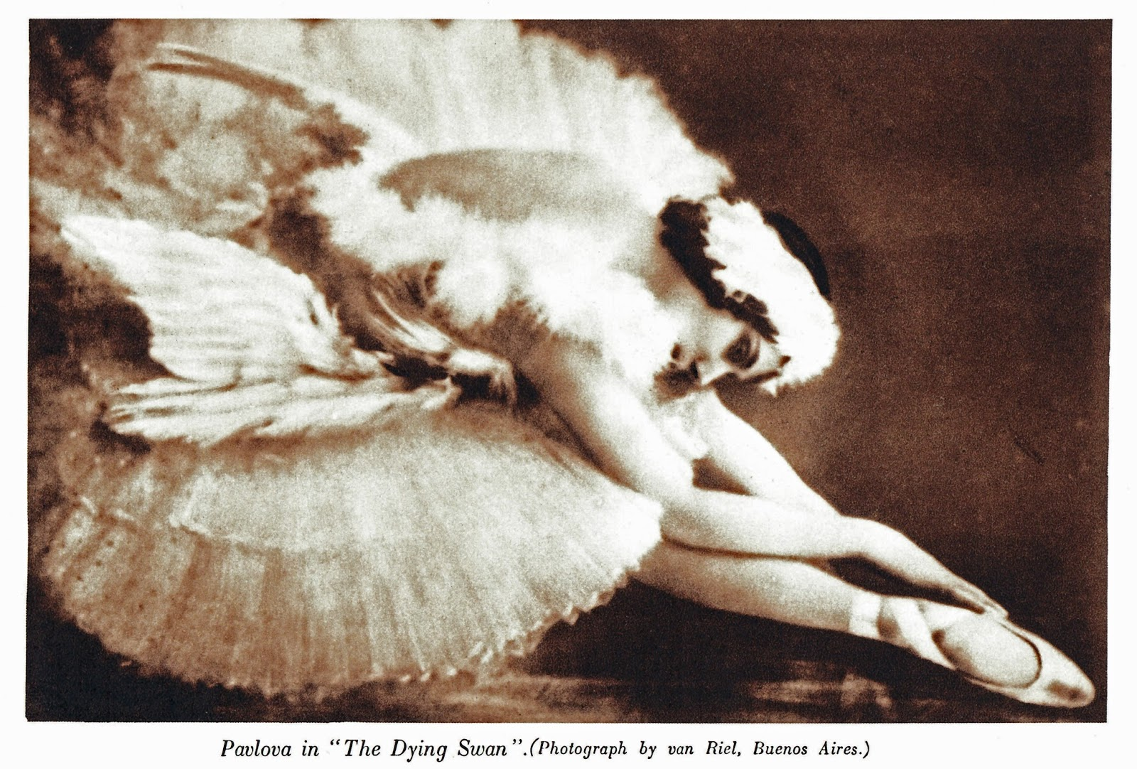 Dying Swan 2