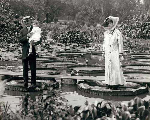 Water lilies in Tower Grove Park, ca. 1900