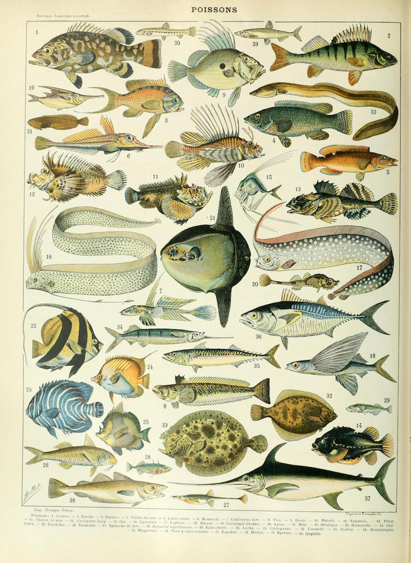 Adolphe_Millot_poissons_A