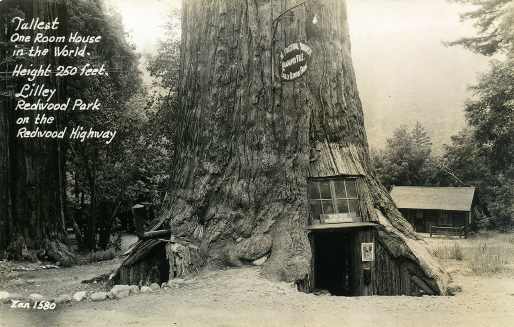 Tallest_One_Room_HouseLilley_Redwood_Park_on_the_Redwood_Highway_1580