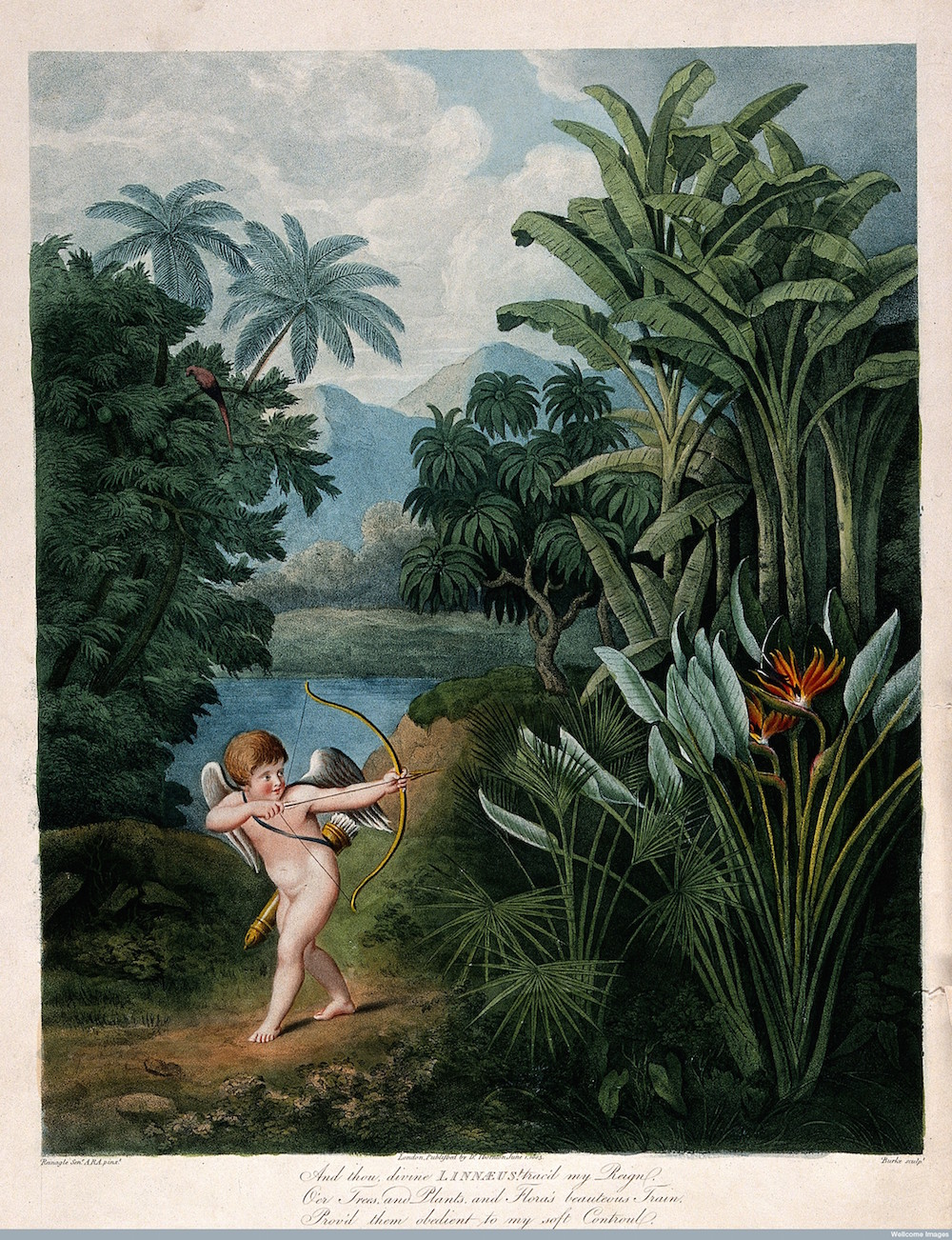 V0042992 Cupid inspiring plants with Love, in a tropical landscape. C