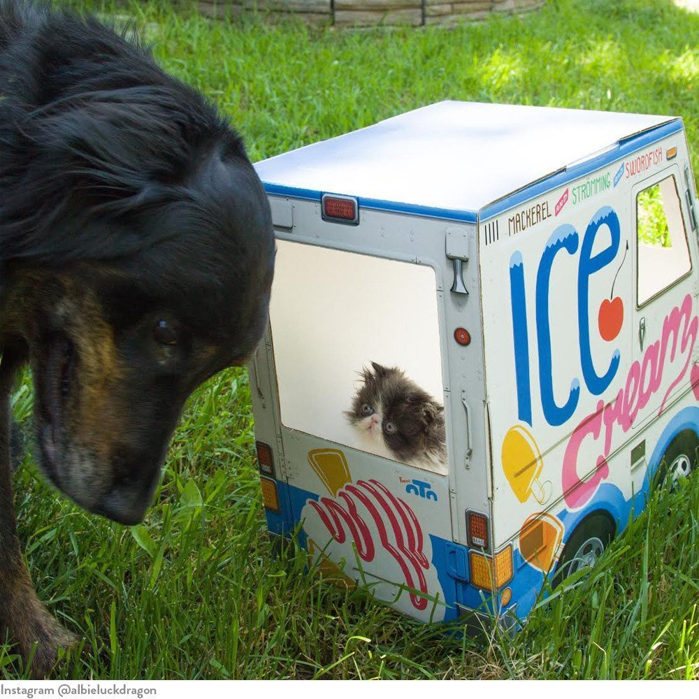 oto-cat-truck-oto-ice-cream-truck-for-cats-5_1024x1024