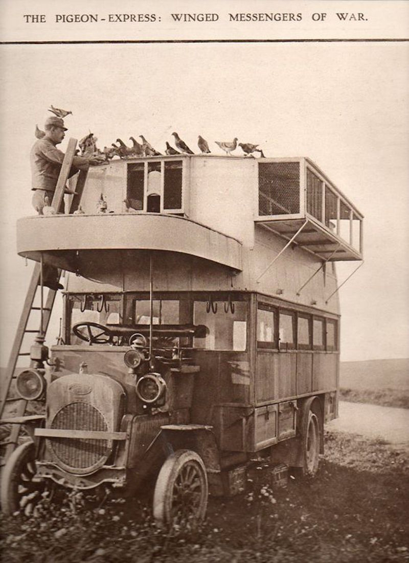 Pigeons of War and their Double Decker Buses